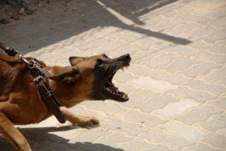 5 coisas que você faz e seu dog odeia muito