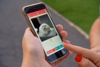 8 aplicativos básicos de celular para quem possui cães