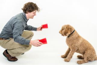 Aprenda a estimular a inteligência do cachorro