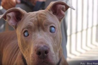 Cadela cega muda de vida após ser abandonada