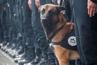 Cadela policial morre durante operação antiterrorista na França