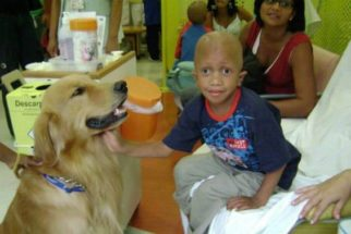 Cães ajudam crianças no tratamento contra o câncer