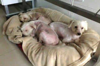 SP: cães são resgatados de incêndio e recebem tratamento