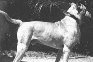 Raças de cachorros que foram extintas