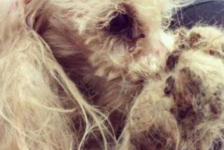 Cão passa por transformação completa após ser resgatado das ruas