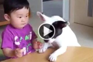 Cão pega biscoito de garoto e ainda o imita chorando