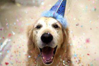 Como dar uma festa de aniversário para o cão