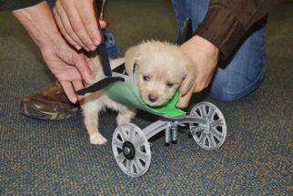 Cadeira de rodas feita em impressora 3D muda a vida de filhote deficiente
