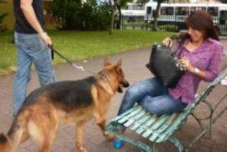 Como perder o medo de cachorros?