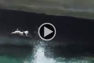 Conheça Titti: a cadelinha mergulhadora