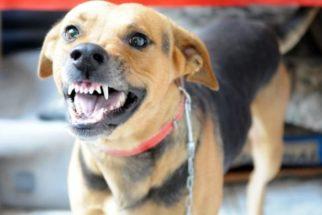 Descubra os principais motivos que deixam o cão estressado