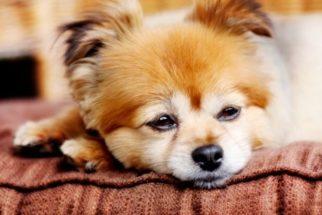 Descubra tudo sobre o câncer em cães