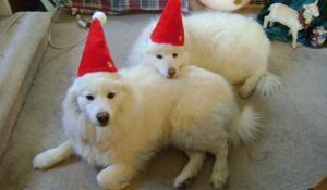 dogs-com-touca-de-papai-noel