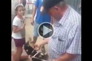 Emocionante é o reencontro de cão e dono após tragédia em MG
