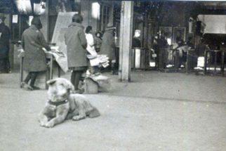 Achada foto de cão que ficou mais de 10 anos em estação à espera do dono