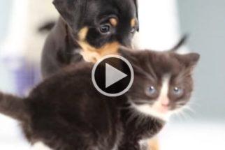 Fofura: cãezinhos encontram gatinhos e se divertem juntos