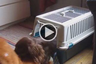 Fofura: cãozinho não dorme sem seu ursinho de pelúcia
