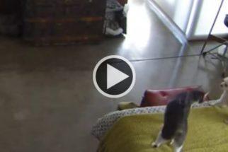 Gato 'manda' cãozinho se 'calar' e vira sucesso na web