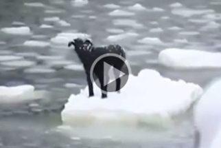 Ilhado em bloco de gelo no mar, cão é salvo por navio de pescadores