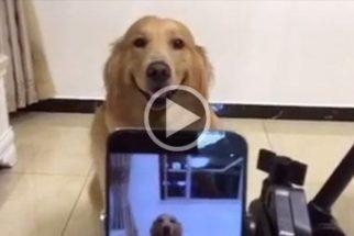Para rir: cãozinho fotogênico posa e sorri facilmente para foto