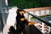 Posso ter um cachorro no apartamento? Saiba o que a lei diz