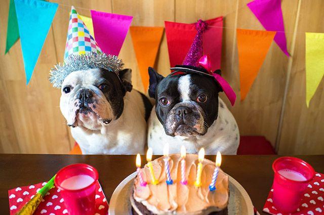 Receita de bolo de aniversário para cachorros