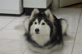 Tally: a cadelinha que acha que é uma gata