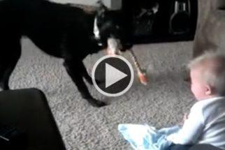 Vídeo: bebê cai na gargalhada com latidos de cão e vira hit na web