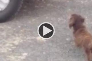 Vídeo: cãozinho tenta proteger os donos do próprio reflexo
