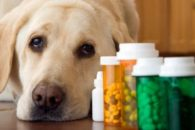 8 ideias criativas para dar remédios aos cachorros