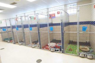 Em campanha na Black Friday, abrigo conseguiu adoção para todos os seus cães