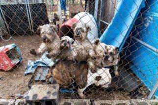 Mais de 50 cães são resgatados de abrigo ilegal