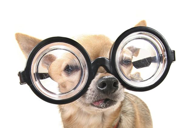 Você tem como saber se seu cachorro está ficando cego a partir de alguns sintomas