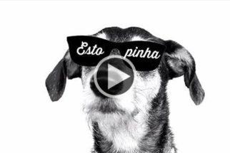 Cadelinha faz sucesso com paródia de música da Anitta