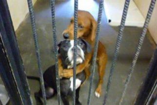 Cadelas são salvas de eutanásia após foto comovente na web