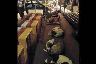 Café abre as portas para que cães de rua se protejam do frio