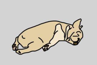 Conheça a personalidade de seu cão através de sua posição de dormir