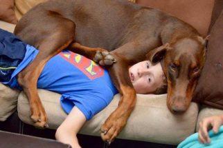 25 fotos de cães completamente 'folgados'