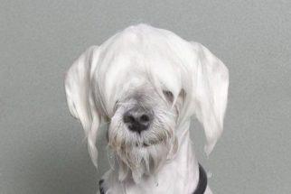 Fotógrafa capta expressões de cachorros molhados