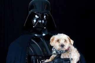 ONG faz ensaio temático de 'Star Wars' com animais para adoção