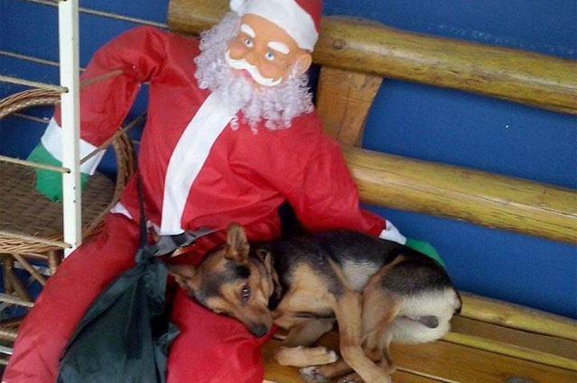 Cãozinho faz sucesso na web após foto deitado no colo do Papai Noel
