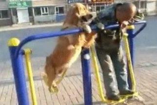 Cãozinho imita dono fazendo exercícios e vira sucesso na web