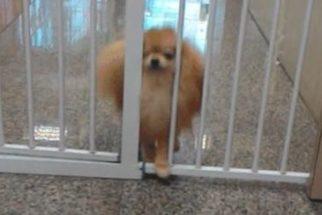 Cãozinho 'viraliza' na web após atravessar pequeno espaço entre barras de ferro
