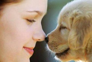 Como mimar o seu melhor amigo canino