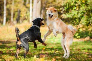 Como separar uma briga de cachorros?
