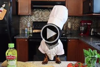 Conheça Crusoe, um chef de cozinha bom pra cachorro