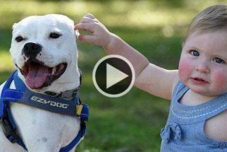 Criança e cão deficientes na luta contra o preconceito