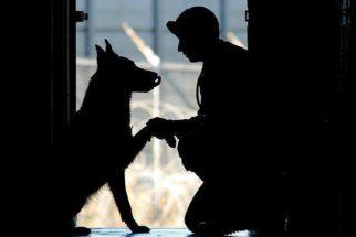 Entenda a síndrome de ansiedade de separação em cães