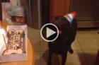 fofo-cadela-nao-contem-alegria-em-sua-festa-de-aniversario