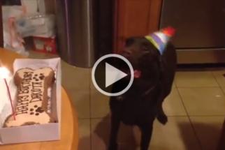 Fofo: cadela não contém alegria em sua festa de aniversário